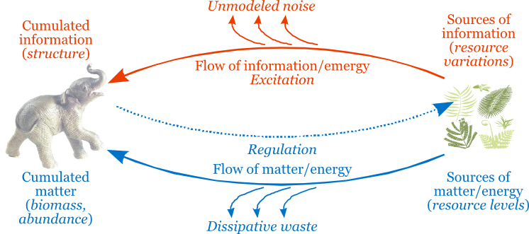 flows of information and energy