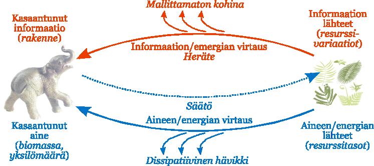 informaation ja energian virtaukset